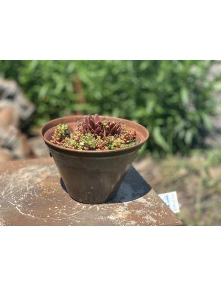 Metall Blumentopf Winterhart und Frostsicher mit Sukkulenten bepflanzt