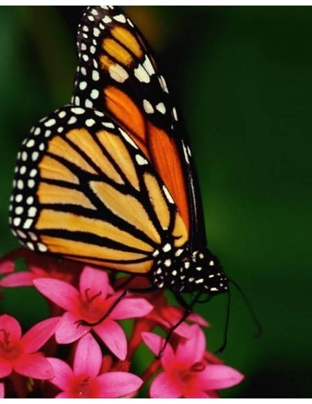 Schmetterling Windlicht klein mit Ausschnitten