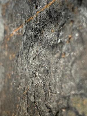 Detailfoto schwarzer Rost